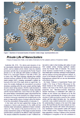 thumbnail -the private life of nanoclusters press article first page