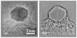 Delocalized and corrected image of an Au-nanoparticle